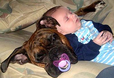 boxer y bebe