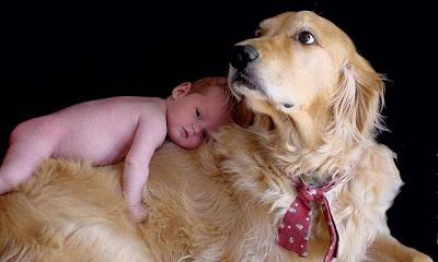 golden y bebé