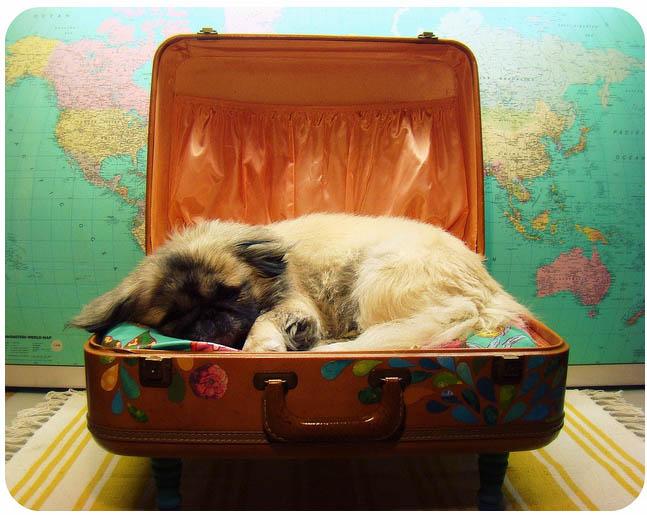 cama_maleta
