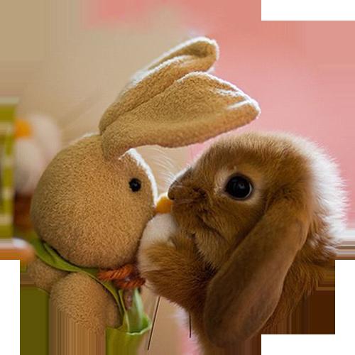 Conejo_peluche