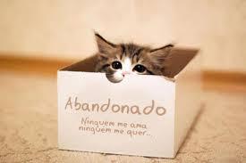 Gato_avandonado