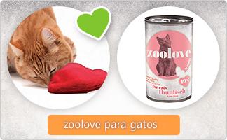 zoolove_gato