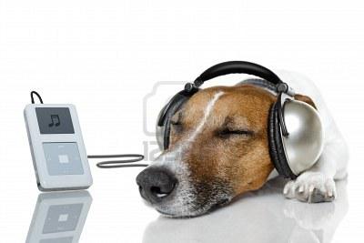 perro_musica