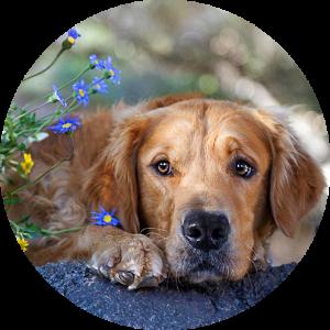 perro_polen