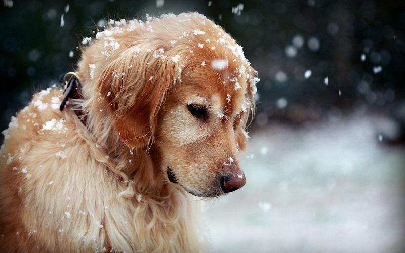 invierno_senior_sitandplas