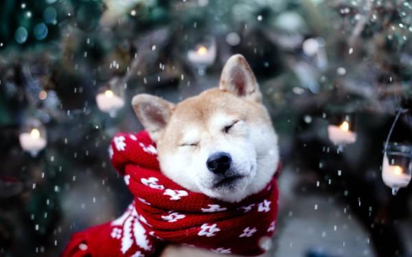 invierno_sitandplas